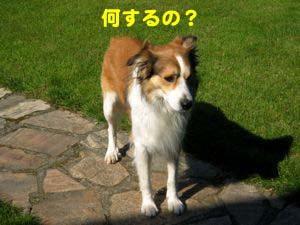 2008072403_convert_20080725010007.jpg