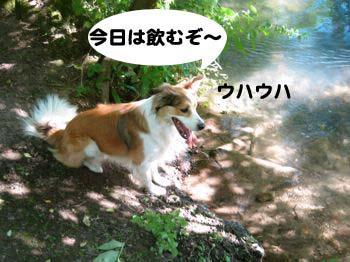 2008072501_convert_20080726023559.jpg