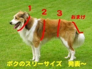 2008072512_convert_20080726023939.jpg