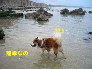 2008072609_convert_20080726220740.jpg