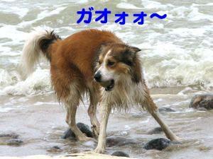 2008072615_convert_20080726220940.jpg