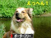 2008080817_convert_20080808173043.jpg