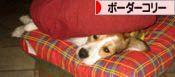 2008080909_convert_20080810023556.jpg