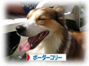 2008081112_convert_20080811173335.jpg