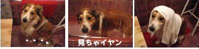 2008090110_convert_20080902012429.jpg