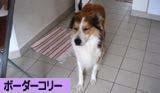 2008090610_convert_20080906181057.jpg