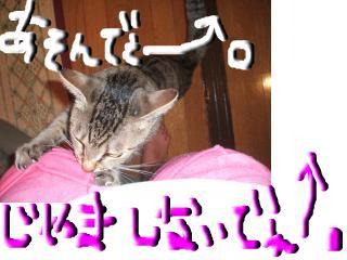 snap_topko_20089417119.jpg
