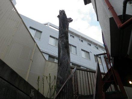 大木撤去 神戸市中央区
