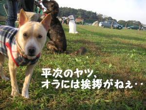 morimaki200811 (11)