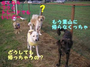 mirimaki200811(16).jpg