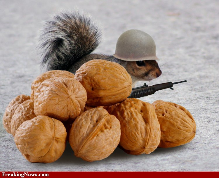 Squirrel-Soldier-Nuts--43495.jpg