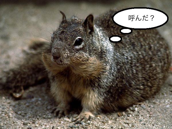 rock-ground-squirrel_5901_600x450.jpg