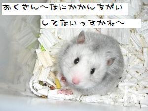 kochan1161.jpg