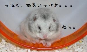 kochan412.jpg