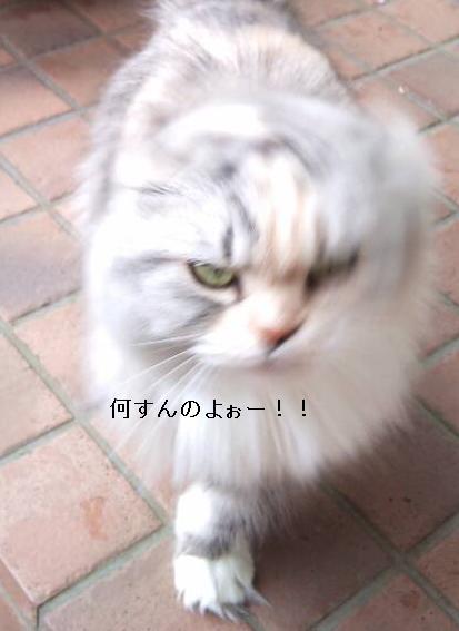 (`A´)猫
