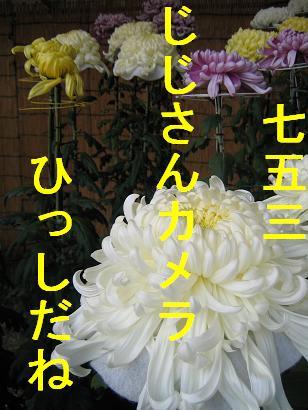 IMG_7577.jpg