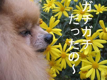 さむいし・ひとはこわいし~(/_;)