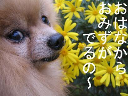 花と鼻(笑)