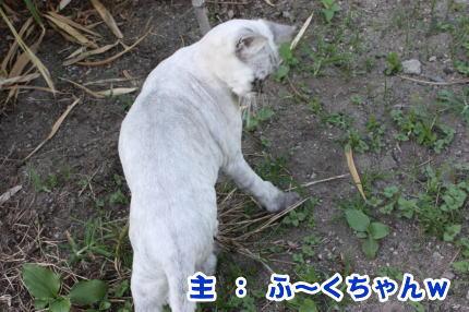 普通の猫ですよね?