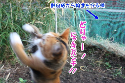 猫のまろ2