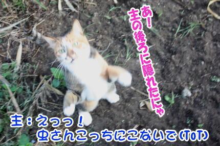 猫のまろ5