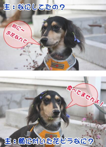 犬は花好き?