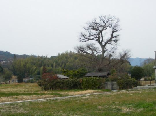 goboutuka001.jpg