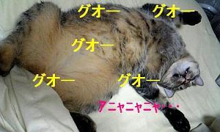 タス寝る-1