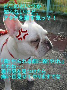 もちきれ-1