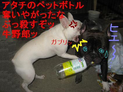 ペットボトル再利用2