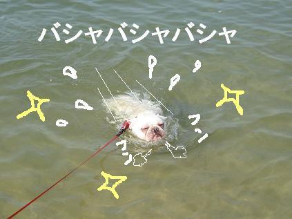 もち泳ぐ1