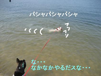 もち泳ぐ2