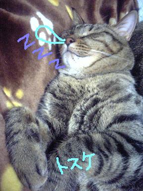 寝るトスケ