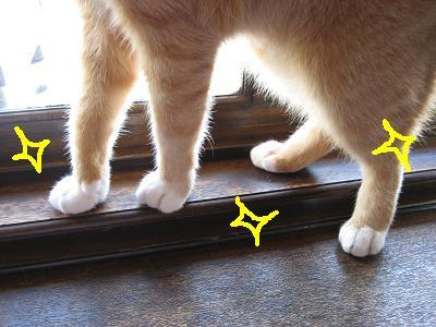ゲンちゃんの足