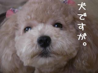 犬ですふぁ0717