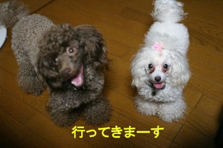 IMG_7599b.jpg