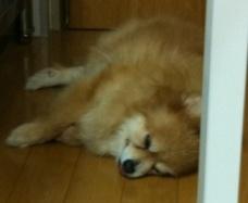 テコ変顔寝顔。