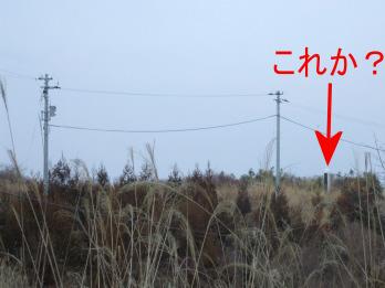 oshika5.jpg