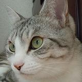 turuhuka-3922