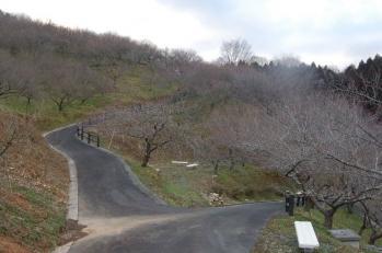 津山市神代梅の里公園 梅開花状況(平成24年3月13日現在)