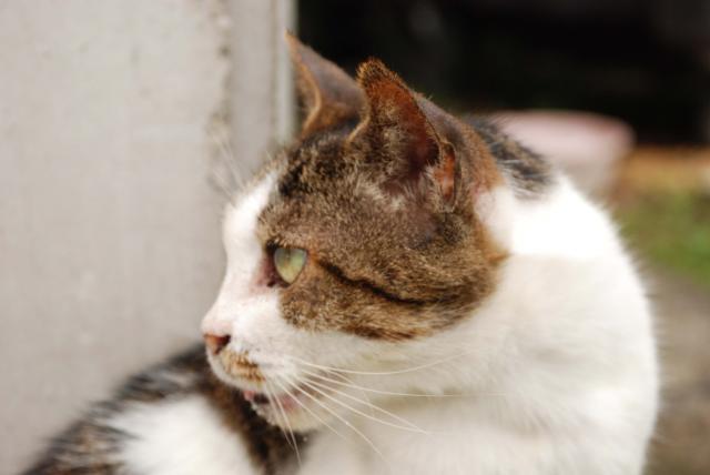 江東区の猫
