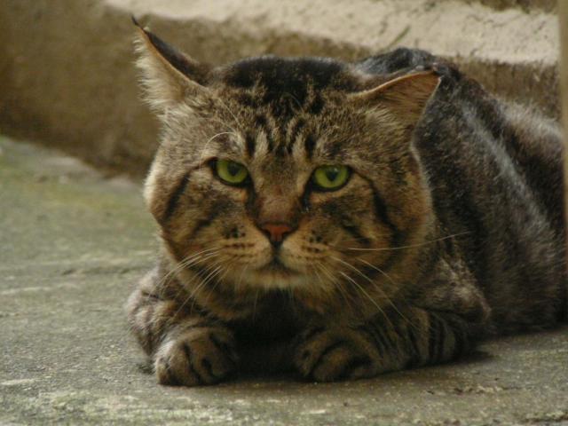 高円寺の猫