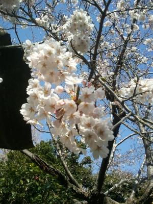 s-2011-04-04 13.16.55