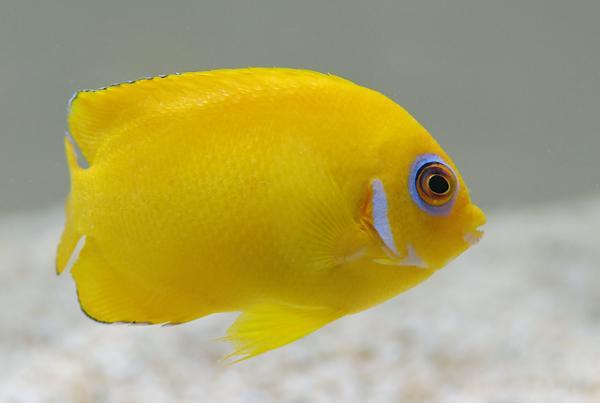 lemon4a.jpg