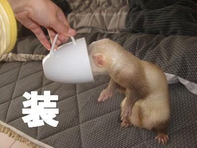 カップ仮面2号01 2009・02・24