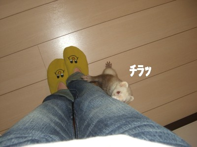 察知01 2009・02・26