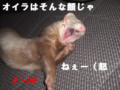 怒りの鉄拳00 2009・02・27