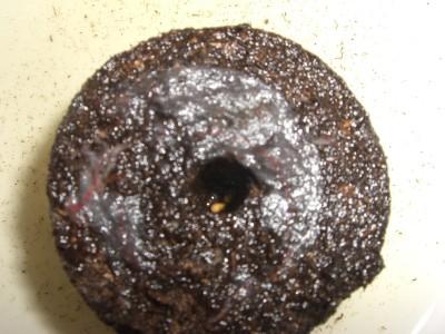花育ちミニトマト00 2009・03・23