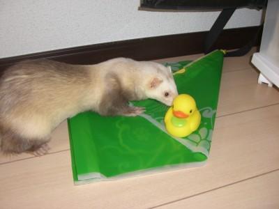 シエテ04 2009・04・01