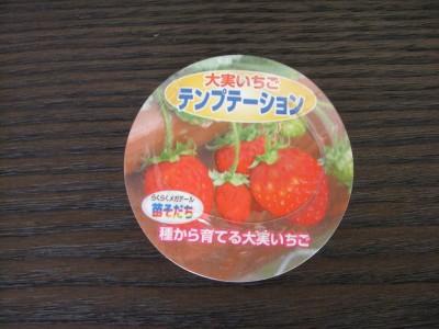 苗育ちイチゴ00 2009・04・08